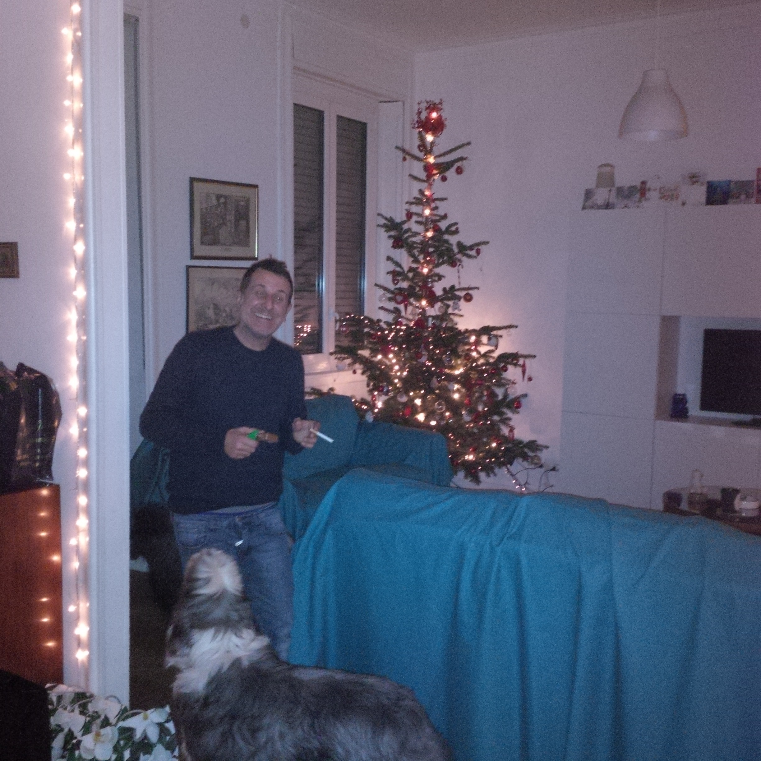 The Xmas tree, F and the dogs