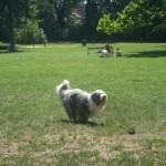 Dino in last park 2